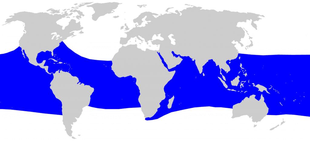 areale habitat squalo balena