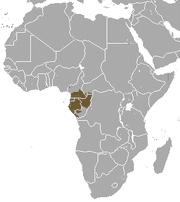 gorilla-occidentale