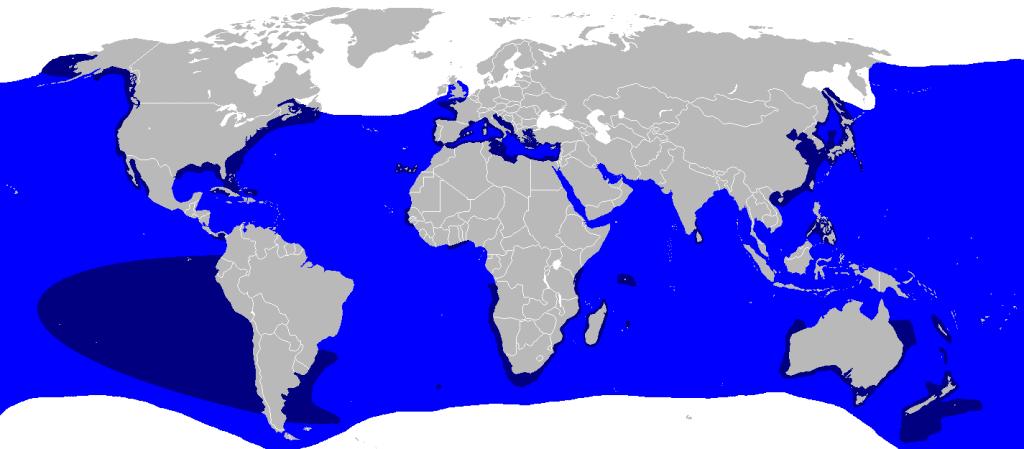 dove vive lo squalo bianco