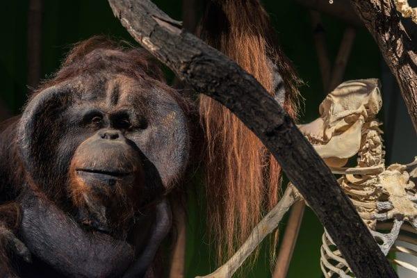 fermare la deforestazione in indonesia