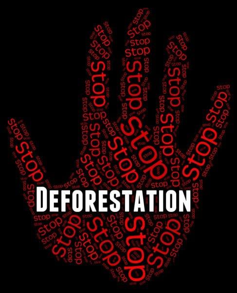 fermiamo la Deforestatione