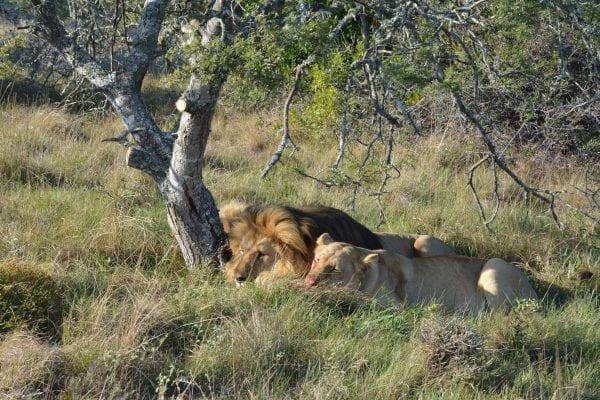 viaggiare in sudafrica