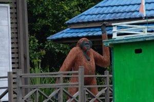 Cosa vedere in borneo indonesiano