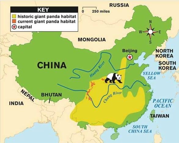 areale panda