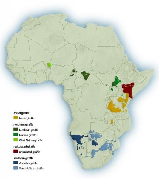 dove vivono le giraffe