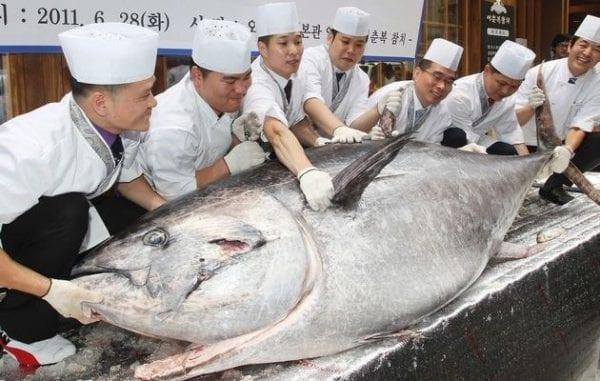onno rosso pesca insostenibile