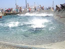 pesca tonnare tonno rosso