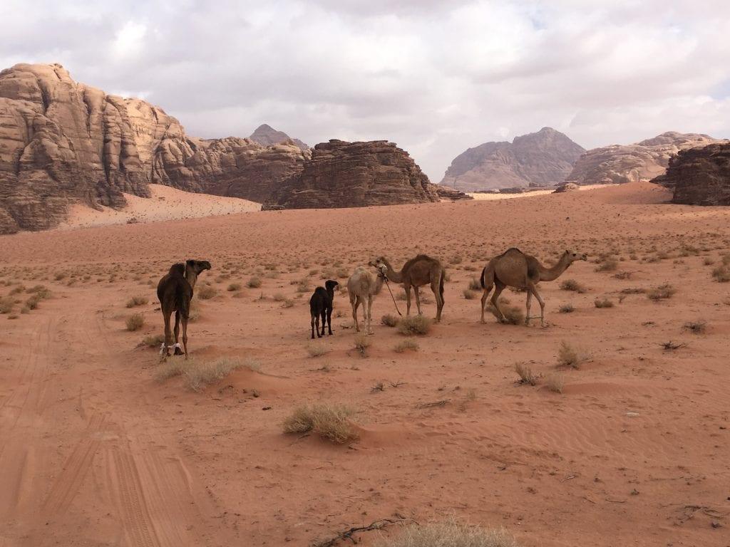 viaggio naturalistico in giordania
