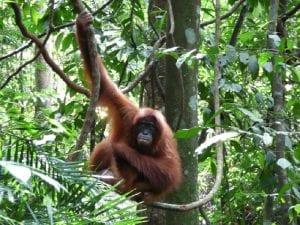 parchi nazionali indonesia