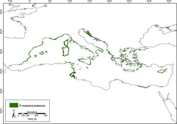 areale presenza posidonia oceanica