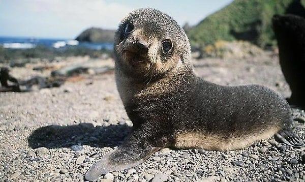 foca monaca italia