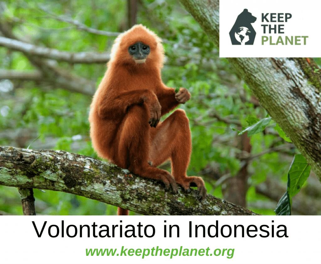 volontariato ambientale in indonesia