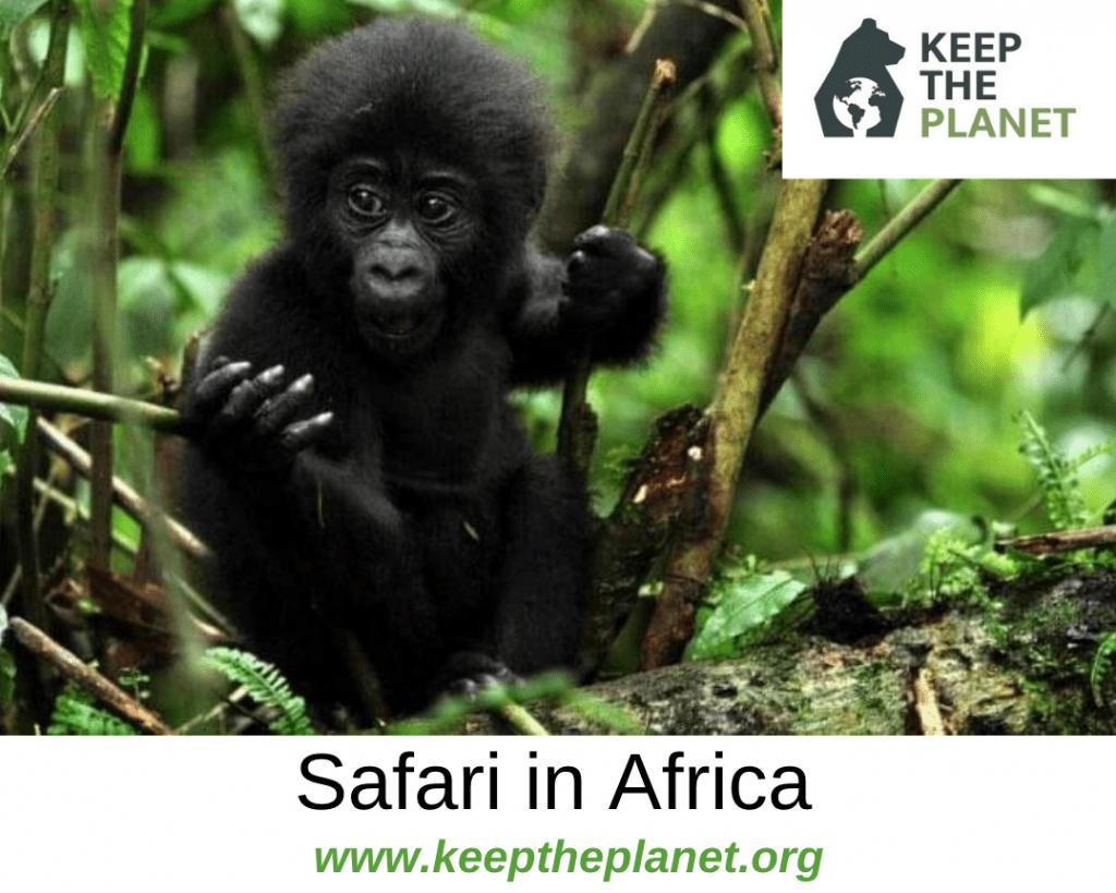 organizzare un safari in africa