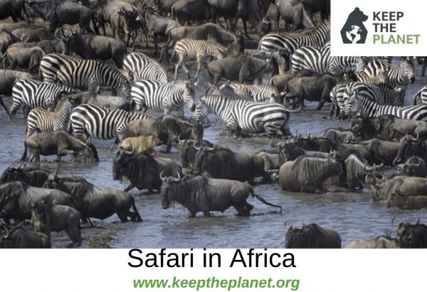 africano grande mozzicone
