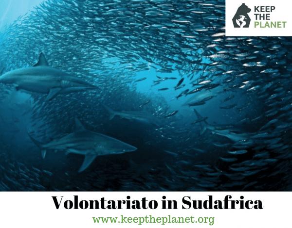 volontariato ambientale in sudafrica