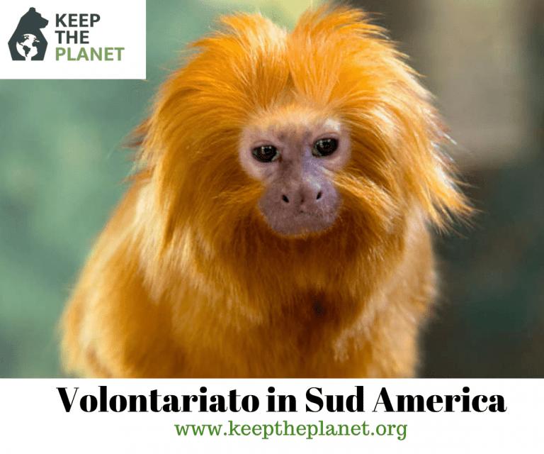 Volontariato ambientale in Sud America