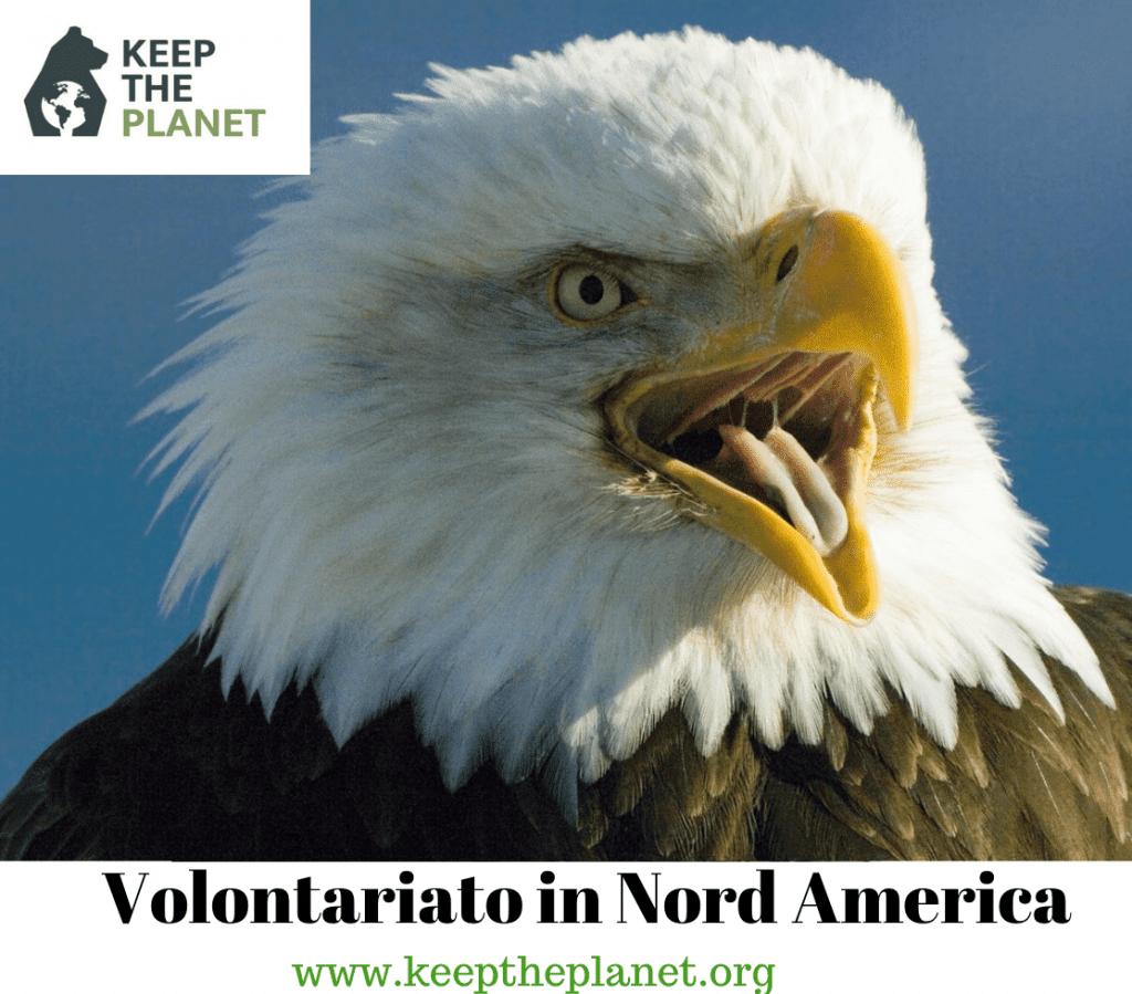 Volontariato ambientale in Nord America