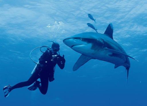 diventare biologo marino