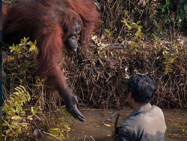 dove fare il volontario in indonesia