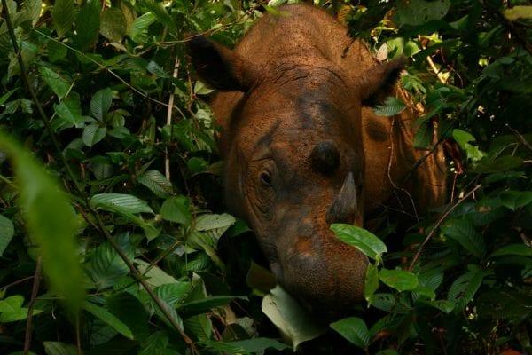 volontariato conservazione indonesia