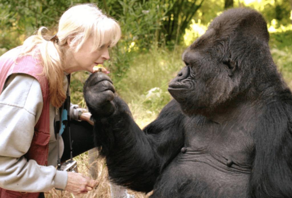 volontariato ambientale in uganda