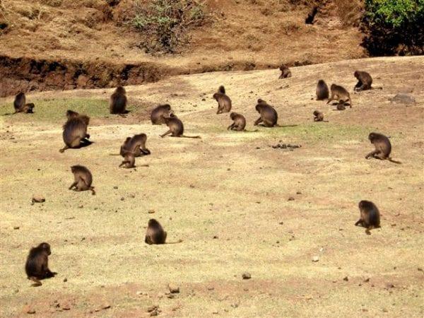 Volontariato ambientale in Etiopia
