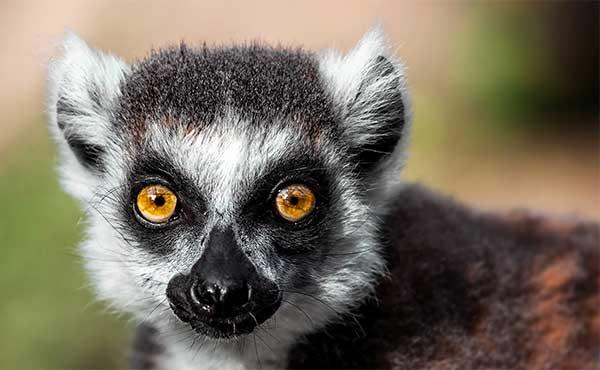 Volontariato ambientale in Madagascar
