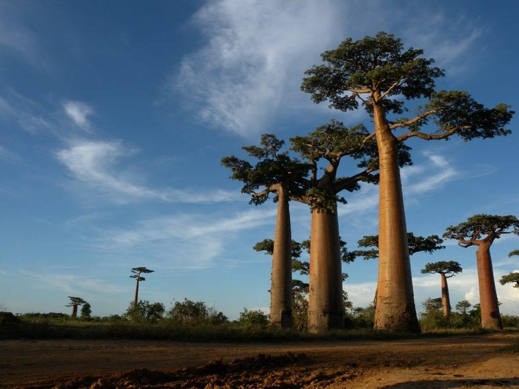 Volontariato ambientale in Senegal