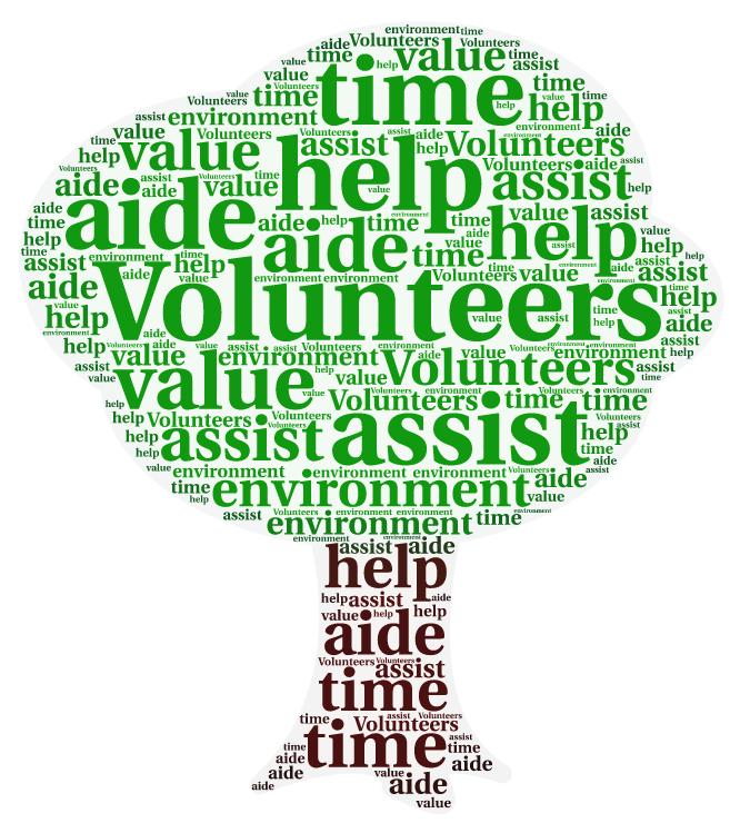 Volontariato ambientale internazionale
