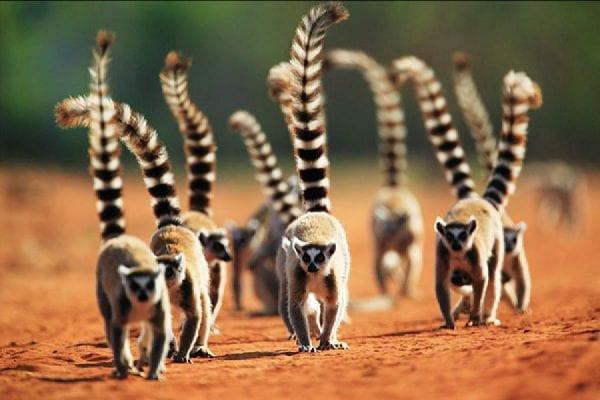 Volontariato in Madagascar