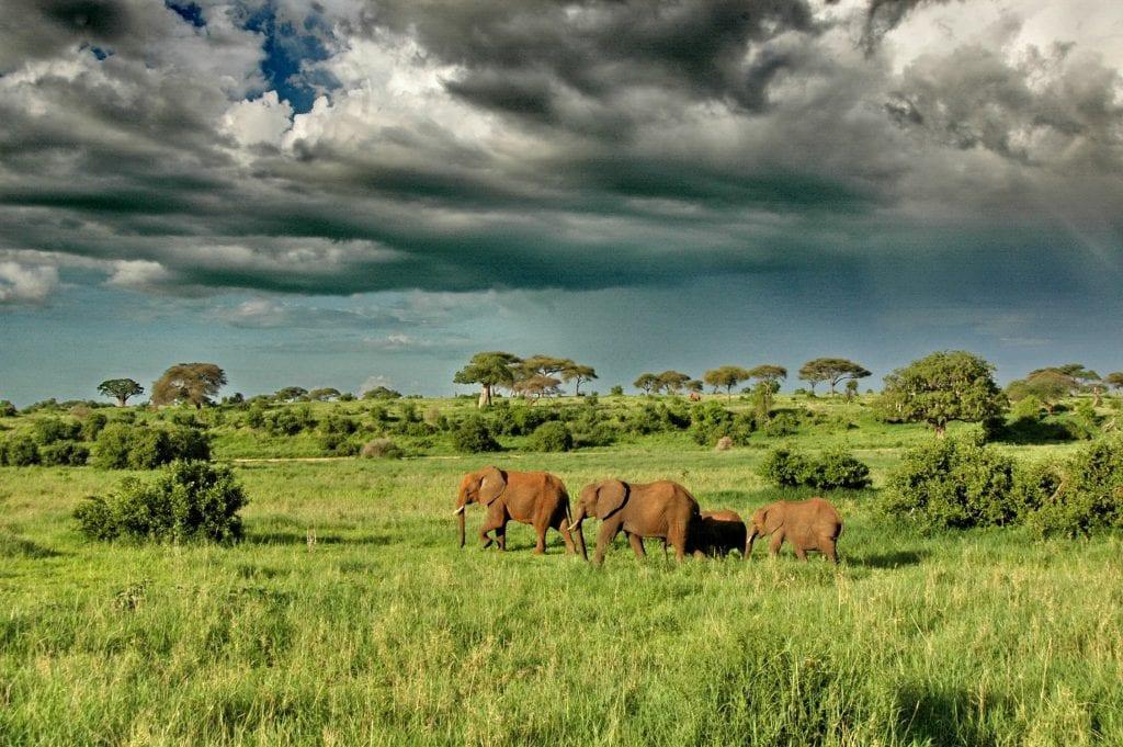 safari in tanzania quando andare