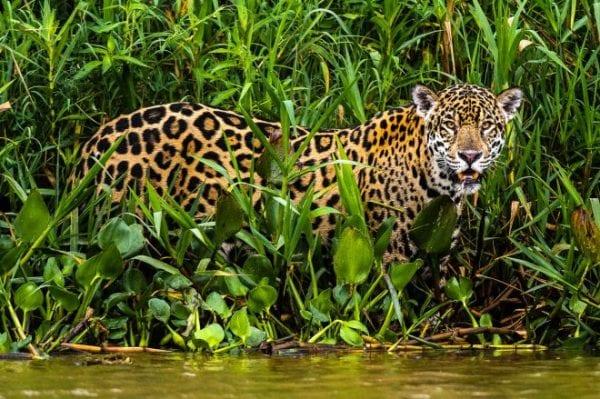 volontariato ambientale in brasile