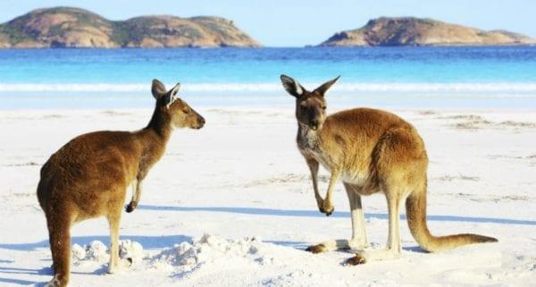 Volontariato ambientale in Australia