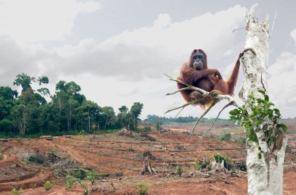 alternative olio di palma