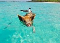 volontariato ambientale alle bahamas
