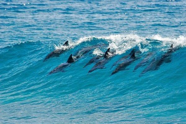 volontariato delfini mozambico