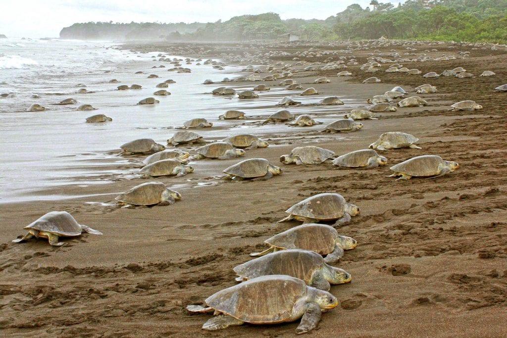 volontariato tartarughe costa rica
