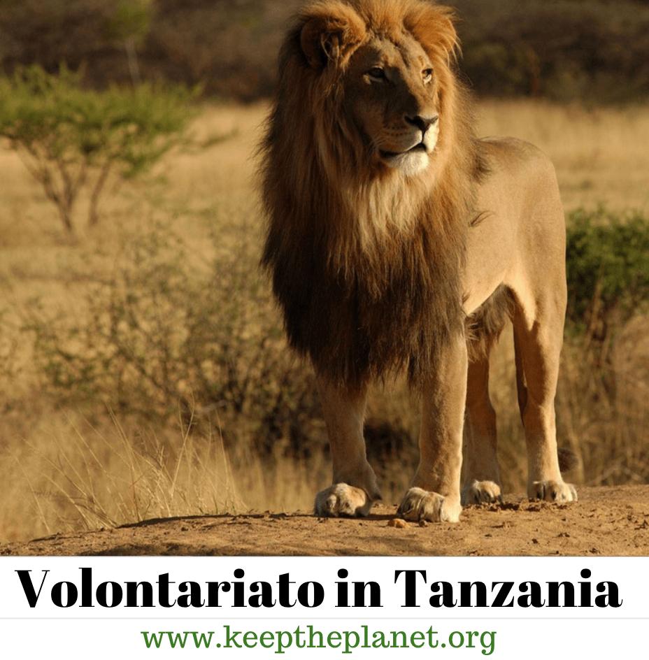volontariato in Tanzania