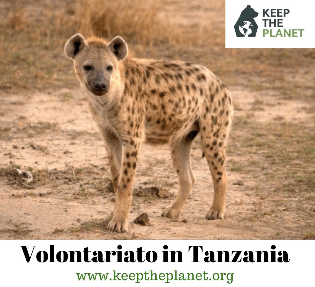 volontariato ambientale in Tanzania