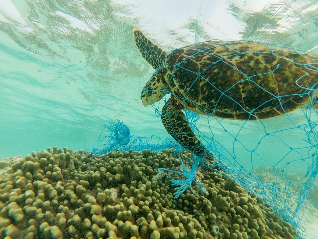 come salvare le tartarughe marine