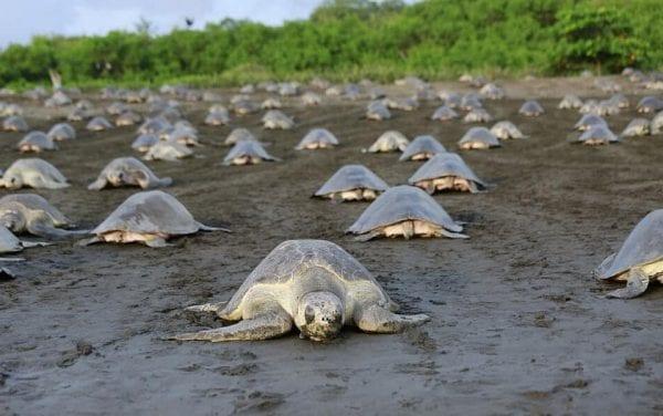 deposizione uova tartarughe marine
