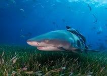 dove fare volontariato con gli squali