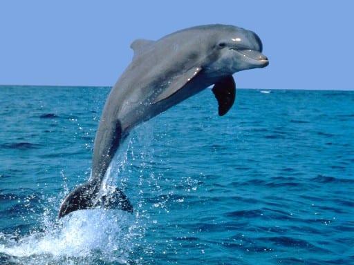 dove fare volontariato con i delfini