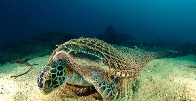 salviamo le tartarughe marine