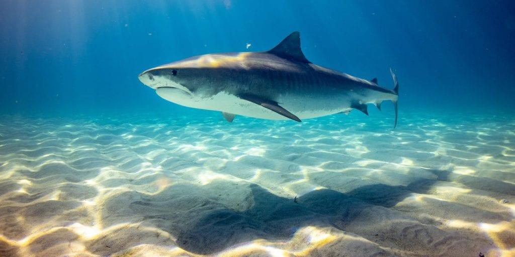 volontariato con gli squali