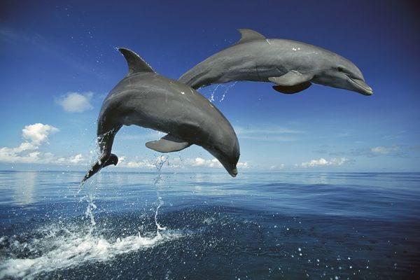 volontariato delfini