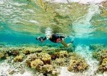 lavorare sulla barriera corallina