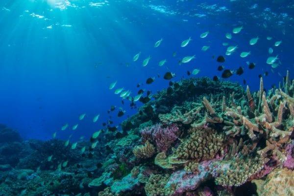 volontariato ambientale barriera corallina