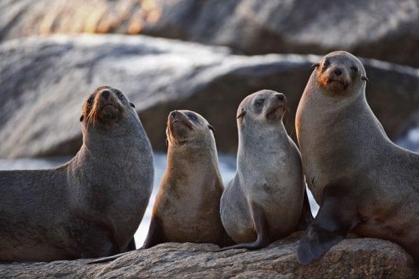 volontariato ambientale con le foche