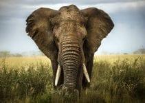 volontariato con gli elefanti